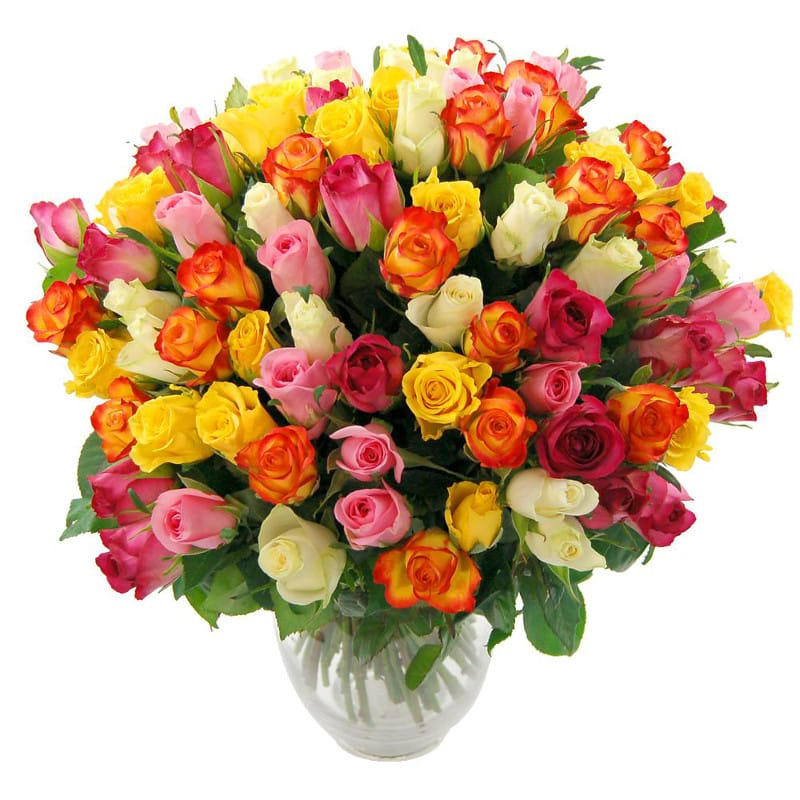 Stockists of 100 Rainbow Roses