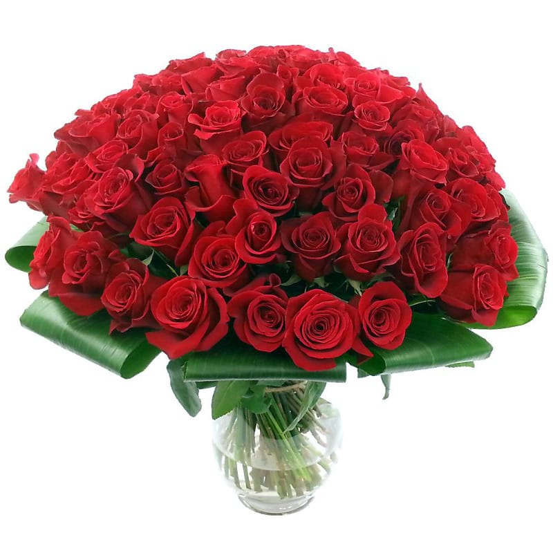 Stockists of 100 Red Roses