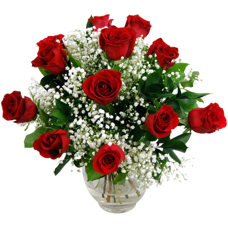Stockists of 12 Luxury Red Roses