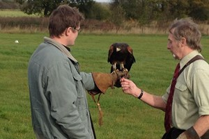 Bargain 3 Hour Birds of Prey Day   Special Offer Stockists