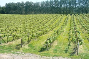 Bargain British Vineyard Tour and Tasting with Lunch for Two Stockists