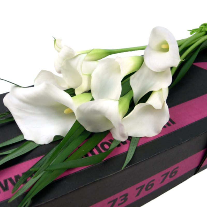 Stockists of Calming Callas