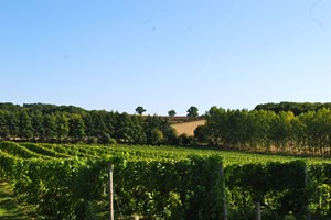 Bargain Chilford Hall Vineyard Tour and Tasting with Lunch for Two in Cambridgeshire Stockists