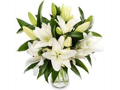Stockists of Classic Lilies