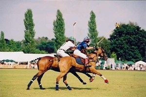 Bargain Discover Polo Experience at Westcroft Park Stockists