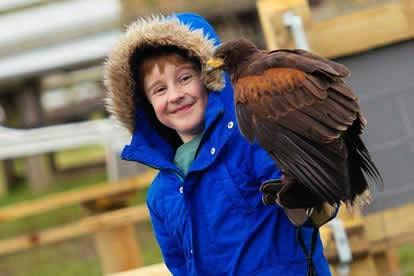 Bargain Full Day Medieval Falconry Experience at Hedingham Castle Stockists