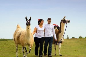 Bargain Llama Trekking and Cream Tea for Two Stockists